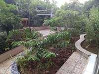 河江中心地段-电梯低楼层大三房高档装修带前后花园共300平方-朝向南北